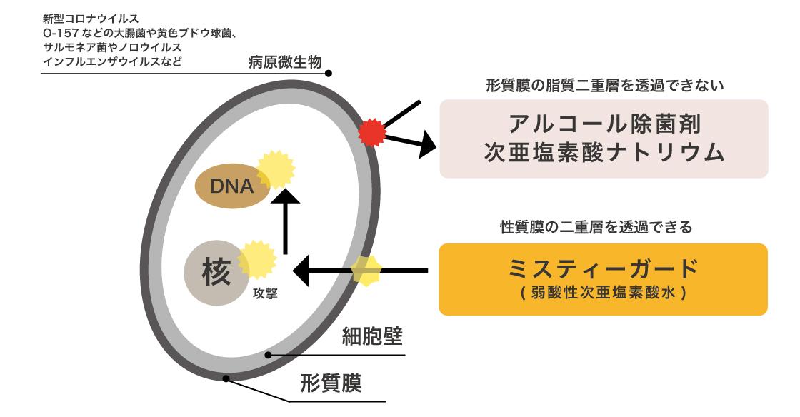 病原微生物-1